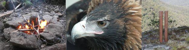 eagle panorama large