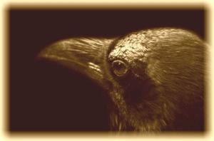 raven_sepia left
